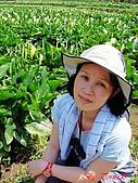 2008陽明山海芋節:DSC02799.jpg