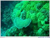 2005年彩虹的故鄉:帛琉:IMGP0891.jpg