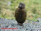 2020 紐西蘭〜蒂阿瑙湖:L1250710.jpg