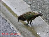 2020 紐西蘭〜蒂阿瑙湖:L1250714.jpg