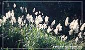 2010年福源山步道:DSC08505.jpg