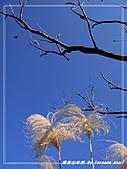 2010年福源山步道:DSC08507.jpg