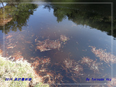 2019 再訪嘉明湖:P4232024.jpg