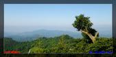 2012年台中太平酒桶山:6.jpg
