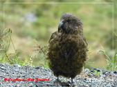2020 紐西蘭〜蒂阿瑙湖:L1250713.jpg