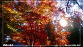 2011年福壽山農場:IMGP2809.jpg