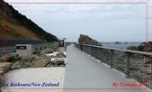 2020 紐西蘭〜凱庫拉:P1256166.jpg