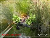 2020 紐西蘭〜蒂阿瑙湖:P1317022.jpg