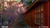 2011年福壽山農場:IMGP2820.jpg