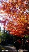 2011年福壽山農場:IMGP2821.jpg