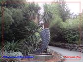 2020 紐西蘭〜皇后鎮:P1296755.jpg