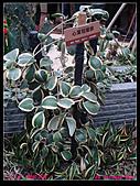 2011年花博新生園區:DSC08617.jpg