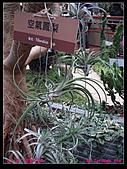 2011年花博新生園區:DSC08618.jpg