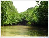 2005年彩虹的故鄉:帛琉:IMGP0930.jpg