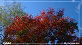 2011年武陵楓紅:IMGP2642.jpg