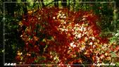 2011年武陵楓紅:IMGP2643.jpg