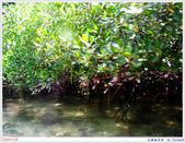 2005年彩虹的故鄉:帛琉:IMGP0945.jpg