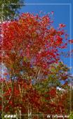 2011年武陵楓紅:IMGP2661.jpg