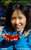2011年武陵楓紅:IMGP2664.jpg