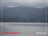 2020 紐西蘭〜蒂阿瑙湖:P2017112.jpg