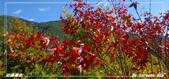 2011年武陵楓紅:IMGP2677.jpg