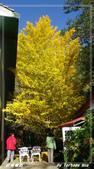 2011年武陵楓紅:IMGP2698.jpg