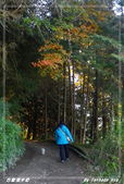 2011年合歡溪步道/天池:IMGP2932.jpg