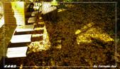 2011年武陵楓紅:IMGP2701.jpg