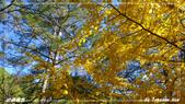 2011年武陵楓紅:IMGP2705.jpg