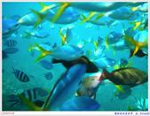 2005年彩虹的故鄉:帛琉:IMGP1006.jpg