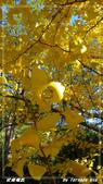 2011年武陵楓紅:IMGP2707.jpg