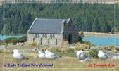 2020 紐西蘭〜蒂卡波湖 :L1240774.jpg