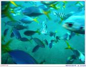 2005年彩虹的故鄉:帛琉:IMGP1007.jpg