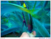 2005年彩虹的故鄉:帛琉:IMGP1009.jpg