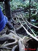 2008年悠遊山林~白雞山:DSC02445.JPG
