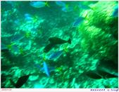 2005年彩虹的故鄉:帛琉:IMGP1015.jpg