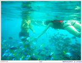2005年彩虹的故鄉:帛琉:IMGP1018.jpg