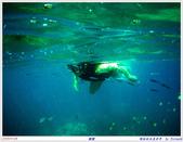 2005年彩虹的故鄉:帛琉:IMGP1023.jpg