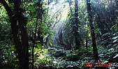 2008年悠遊山林~白雞山:DSC02469.JPG