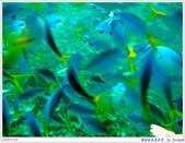 2005年彩虹的故鄉:帛琉:IMGP1026.jpg