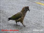 2020 紐西蘭〜蒂阿瑙湖:L1250706.jpg