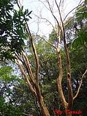 2008年悠遊山林~白雞山:DSC02458.JPG