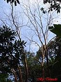 2008年悠遊山林~白雞山:DSC02459.JPG