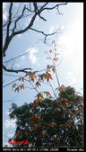 2012年四獸山步道:IMGP4238.jpg