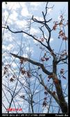 2012年四獸山步道:IMGP4239.jpg