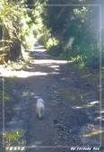 2011年合歡溪步道/天池:IMGP2945.jpg