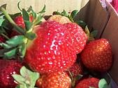 採草莓:025