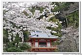 日本北九州山陽之旅:990327-03-太宰府櫻花.jpg