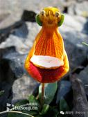 flower:1030829789_m.jpg
