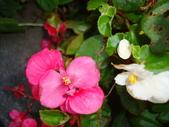 flower:DSC01601.JPG